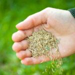 Grass-seed-og